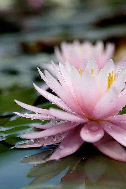 the-mystic-word-myo-to-denote-the-lotus-flower-which-flowers-and-seeds-at-once-p-2.jpg
