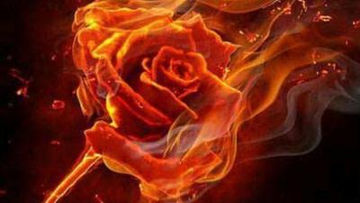 ROSE ON FIRE(POEM)